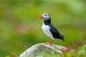 الطيور هي الأنسب لبرج الحمل من 21 مارس إلى 19 إبريل