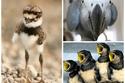 صور طيور طريفة