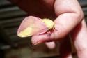 حشرة غريبة بألوان رائعة.. لن تصدق أنها حقيقية!