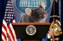 فيديو وصور: سقط فوق رأس صحفي.. فأر في البيت الأبيض وردود الأفعال صادمة