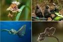 مجموعة من أطرف صور الحياة البرية لعام 2017