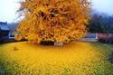 صور تعكس جمال فصل الخريف.. بعضها سيدفعك للسفر حتى نهاية العالم