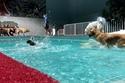 يمكن حجز جلسات سباحة خاصة من الساعة 7 إلى 9 صباحًاً