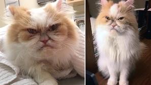 صور: أكثر من 2 مليون متابع في ساعات لقط غاضب خطف أنظار الإنترنت