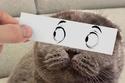ماذا يحدث عند وضع رسومات تعبيرية على وجه القطط؟: صور تكشف النتيجة