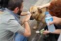 صور ستجعل عينيك تدمع لأشخاص ينقذون الحيوانات من الخطر