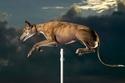 القفزة الأعلى لكلب سُجلت باسم الكلبة سندريلا، ووصلت إلى 172.7 سم.