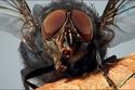 صور وجه النملة عن قرب 1