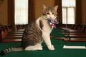 القط لاري كبير صائدي الفئران في مقر رئيس الوزراء البريطاني الرسمي