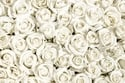 معنى الورد الأبيض