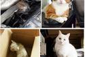 صور مؤثرة لقطط أنقذها أصحابها من الموت واعتبروها من العائلة.. لن تتخيل الفرق الرهيب