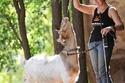 الماعز الودية وامرأة لعوب