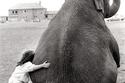 الفيل المخيف والطفل الشجاع