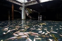 الأسماك تعيش في مول تجاري مهجور