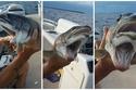 سمكة بفمين