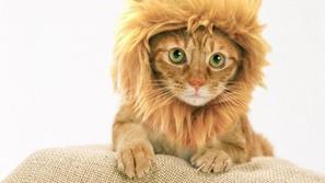 قطة أم أسد؟.. حيوان رصدته كاميرا مراقبة يثير الجدل بحجمه الغريب!