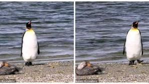 فيديو: لقطات طريفة لبطريق يتسلل بطريقة عفوية لتجنب بطة تجلس على الشاطئ