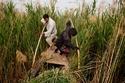 الأهوار العراقية الخلابة