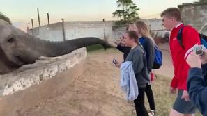 فيديو: رد فعل غير متوقع لفيل ضخم حاولت فتاة التقاط صورة معه