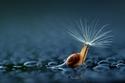 """حيوانات لطيفة تحمل """"مظلات"""" طبيعية تحميها من المطر.. صور ستضحكك وتذيب قلبك"""