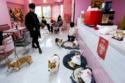 في هذا المطعم الكلاب تقدم الطعام للزيائن