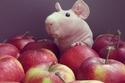 هل تعرف ماذا يكون هذا الحيوان الصغير الجميل؟ شاهد الصور وتعرف عليه