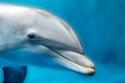 الدلافين تنام و إحدى عينيها مفتوحة