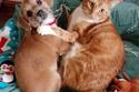 قط وكلب على أريكة