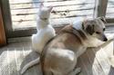 قط وكلب في حالة استرخاء