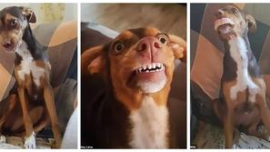 صور طريفة لكلب يسرق أسنان جدة عجوز ويرتديها في فمه بابتسامة عريضة