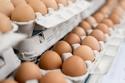 يحدد النظام الغذائي للدجاجة لون الصفار