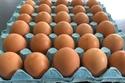 لا ينتج الدجاج بيضة واحدة في كل مرة بدلاً من ذلك