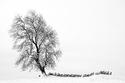 روعة الشجرة وسط الثلوج