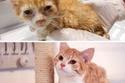 الصورة تتحدث كيف تغيرت هذه القطة الصغيرة