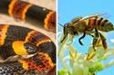 الوان الحشرات