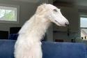 هذا الكلب صاحب أنف طويل جداً يصل إلى 31 سنتيمتر: تعرفوا عليه