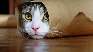 50 صورة : دليلك الكامل للتعامل مع القطط في كل الأوقات 😻