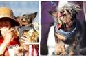 صور: تعرفوا على أبشع كلب في العالم.. هذا هو سر مظهره الغريب