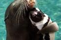 العناق مع البطريق