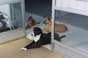 الكلاب في انتظار صديقها