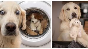 صور: رد فعل طريف لكلبة لمحت لعبتها المفضلة في غسالة الملابس