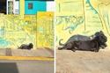 جلوس الكلب على الحائط ونفس الرسمة