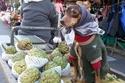 صور مضحكة لكلاب يعملون مع أصحاب كبائعين