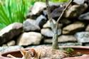 18 صورة لقطط أثبتت رشاقة رهيبة في التأقلم مع المساحات الضيقة.. ستذهلك مرونتها