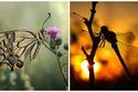 صور مذهلة ستجعلك تقع في غرام الطبيعة من جديد