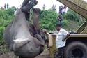 مقتل 7 أفيال