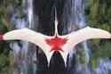 صور: كائن عملاق وأسطوري.. اكتشاف أضخم طائر عرفته البشرية حتى الآن