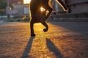 فنون قتالية للقطط