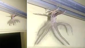 فيديو: ظهور مخيف لمخلوق غريب في أحد المنازل له أذرع وأجنحة