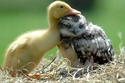 24 صورة كوميدية ستقنعك أن البومة هي أظرف الطيور